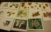 Botanical Watercolors by Dick Rauh