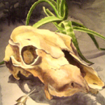 Skull painting by Kathy Kelly