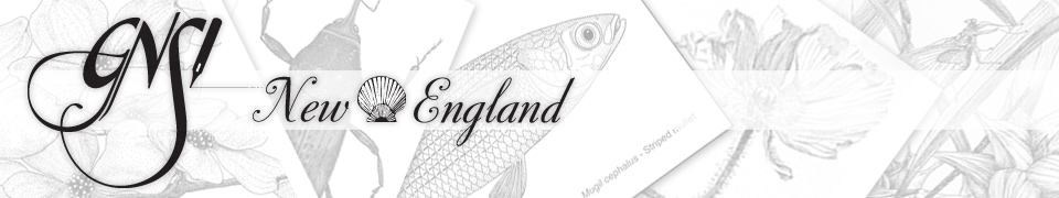 GNSI New England