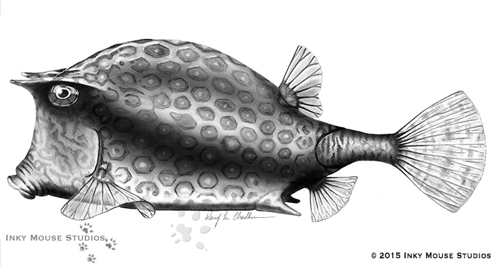 Boxfish Carbondust Illustration
