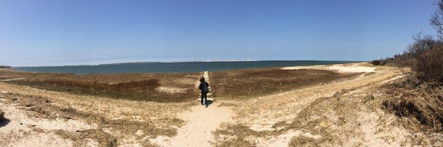 Panoramic photo of the beach at Long Pasture by Wendy Chadbourne