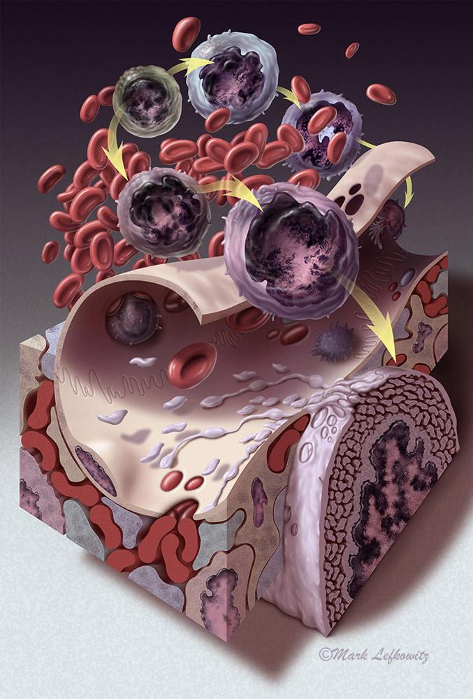 Thrombopoiesis