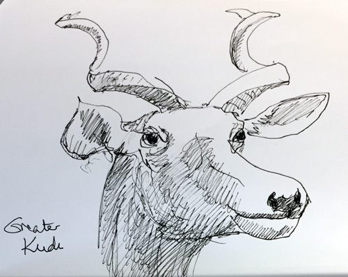 Ecotarium Greater Kudu Sketch by Frances Topping