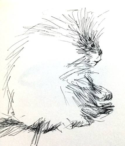 Ecotarium Porcupine Sketch by Nancy Minniegerode