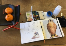 Field Sketching Kit Overview by Wendy Berube