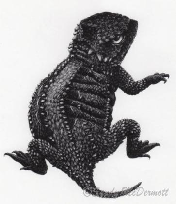 Short Horned Toad