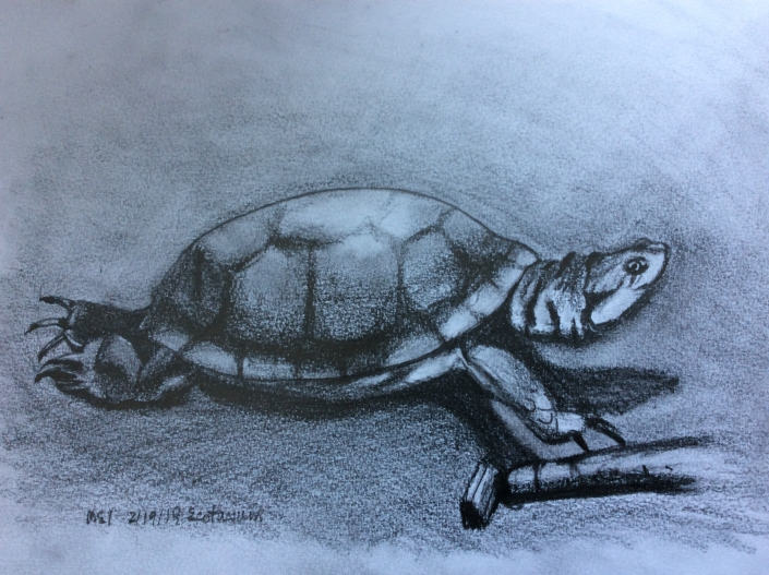Blandings Turtle Sketch by SauiMei Leung