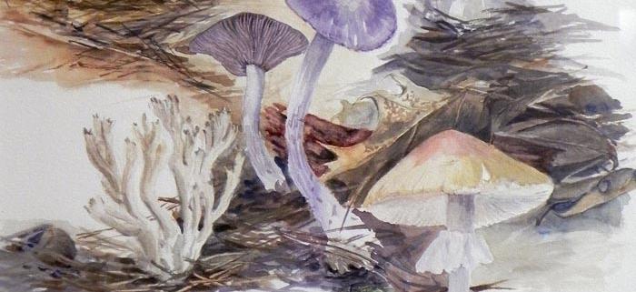 Local Fungi