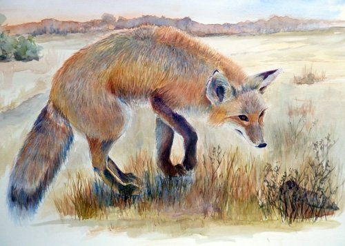 Fox Eyeing Woodcock