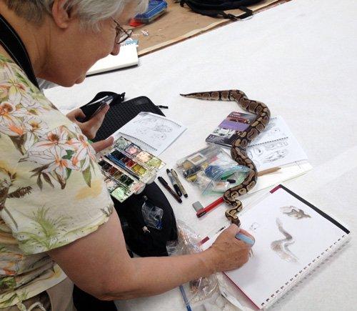 Live Animal Drawing