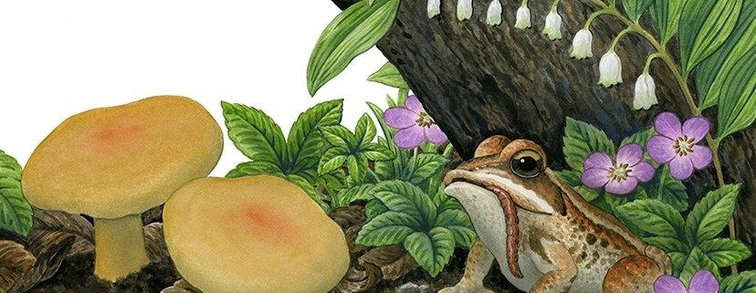 Magnificent mushrooms Workshop Banner