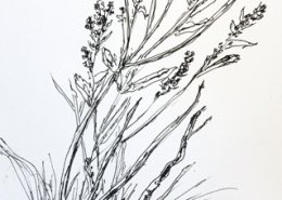 Field Sketch by Peggy Rambach from Rough Meadows Outing