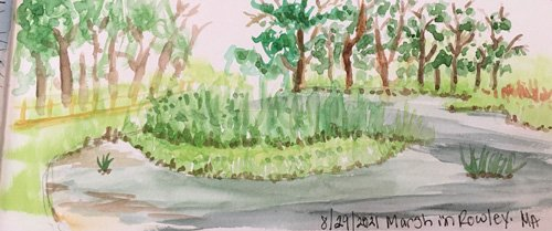 Field Sketch of Marsh by Tricia Cassady from Rough Meadows Outing