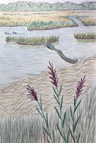 Landscape Sketch #2 of Rough Meadows by Wendy Chadbourne