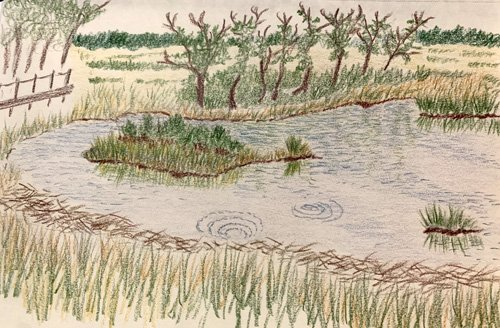 Landscape Sketch #1 of Rough Meadows by Wendy Chadbourne